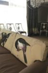 Upholstery (10)